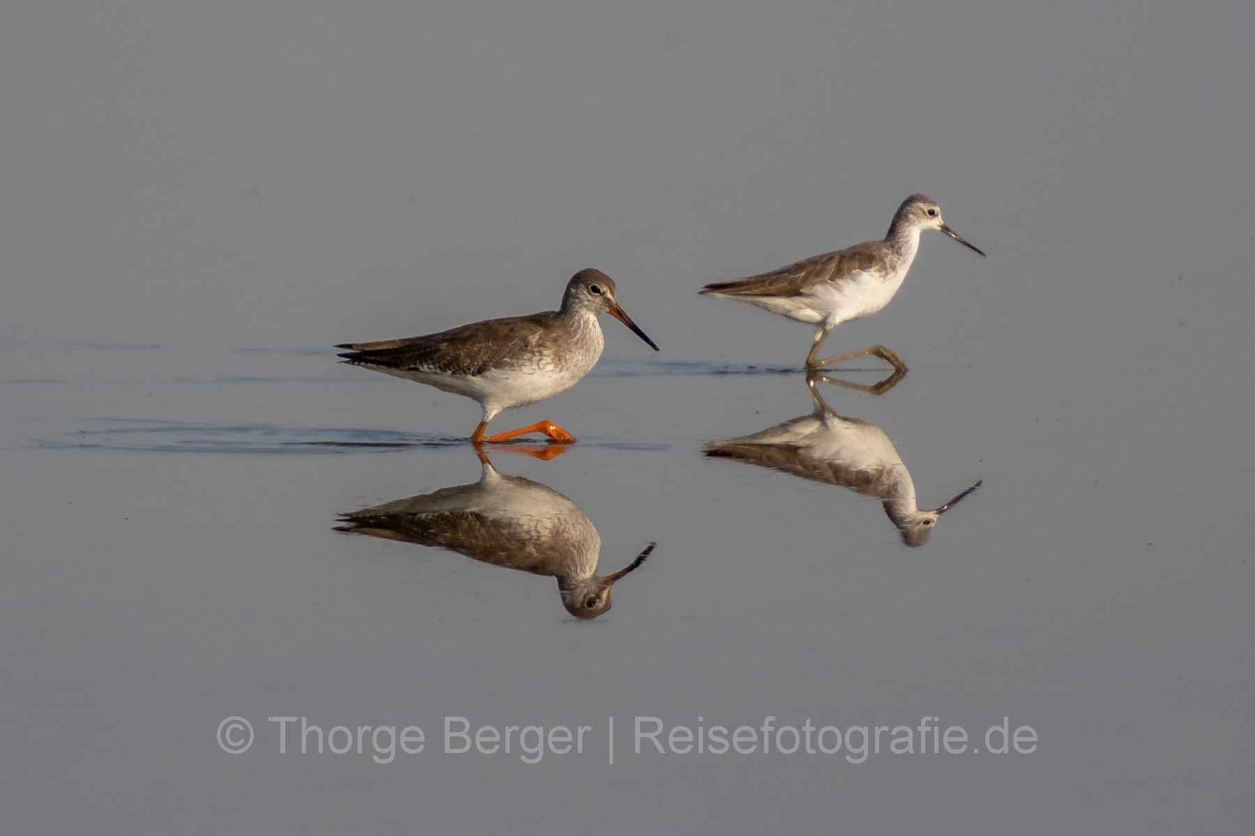 Birds in Little Rann of Kutch National Park