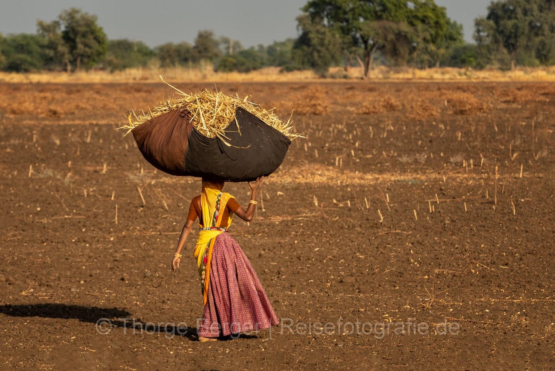 Farm work in Gujarat