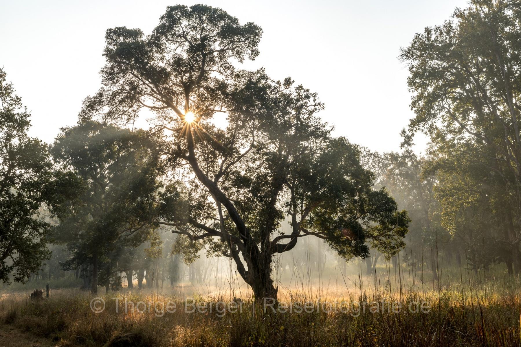India, Kanha National Park
