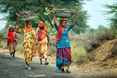Women collecting fire wood in Rajasthan