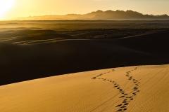 Spuren im Sand der Wüste Mesr
