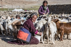Pashmina-Goat-Herders