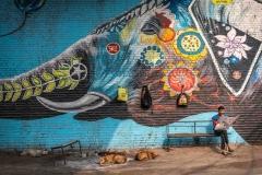 Zeitung-lesender Mann vor Elefanten-Graffiti in Prayagraj, Indien