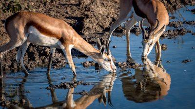 Reisefotografie - Tiere fotografieren