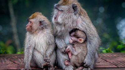 Wildlife & Reisefotografie - Affentag 2020