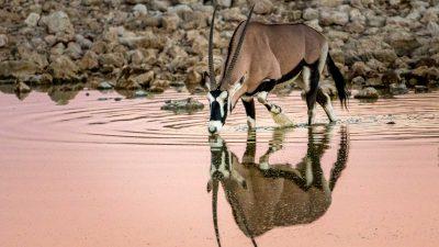 Reisefotografie - Afrika - Wildlife